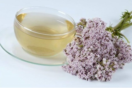 Чай валерианы для беременных